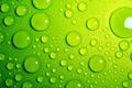 Картинка макро, вода, зелёный, капли