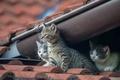 Картинка на крыше, трио, котята, малыши, троица