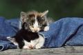 Картинка нежность, животные, малыши, джинсы, котята, спящие котята