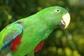 Картинка птицы, зеленый, попугай