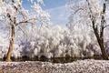 Картинка зима, иней, природа, деревья, ивы, река