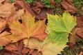 Картинка Leaves, Листья, Colors, Листва, Осень, Autumn