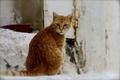 Картинка кошка, кот, фон, рыжий, уличный