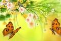 Картинка цветы, лепестки, мотылек, природа, бабочка, листья