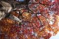 Картинка дерево, ствол, небо, крона, осень, листья