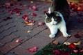 Картинка кошка, пушистая, листья, плитка, трава, осень, лапы, кот