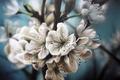 Картинка яблоня, веточки, цветочки, природа, живопись, цветение, белые