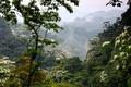 Картинка лес, горы, туман, цветение