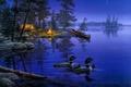 Картинка утки, костёр, палатка, ночь, night, звезда, лес, огонь, лодка, звёзды, природа, painting, живопись, lake, костер, ...