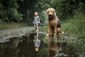 Картинка собака, мальчик, лужа