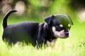 Картинка собака, щенок, свет