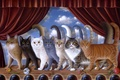 Картинка выступление, Braldt Bralds, сцена, арт, кошки