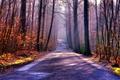 Картинка туман, дорога, осень, лес