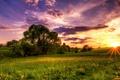 Картинка вечер, одуванчики, луг, солнце, деревья, закат