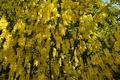 Картинка весна, цветение, yellow, Spring, flowering