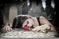 Картинка роза, девушка, настроение