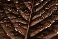 Картинка water, drops, leaf