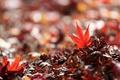Картинка макро, природа, листья