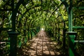 Картинка пейзаж, лабиринт, коридор, лето, Петергоф, природа, Санкт-Петербург, зеленый