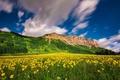 Картинка цветы, Колорадо, горы, Colorado, луг, облака, Crested Butte Mountain Resort