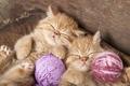 Картинка сон, котята, рыжие, нитки, клубки, двойняшки, спящие