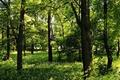 Картинка лето, деревья, зелень