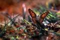 Картинка макро, трава, бабочка