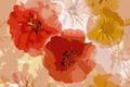 Картинка цветы, розы, текстура
