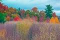 Картинка краски, деревья, багрянец, поле, луг, трава, осень, лес