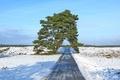 Картинка дерево, снег, поле, природа, дорога, небо, весна