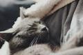 Картинка шерсть, спит, кот