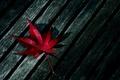 Картинка дерево, лист, красный