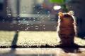 Картинка кошка, пузыри, Daisy, мыльные, © Ben Torode