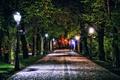 Картинка деревья, ночь, огни, парк, Польша, фонари, дорожка, аллея, Rzeszow