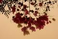 Картинка цветок, листья, цветы, widescreen, обои, wallpaper, широкоформатные, background, обои на рабочий стол, полноэкранные, HD wallpapers, ...
