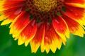 Картинка лепестки, вода, природа, роса, обои, цветок, капли
