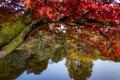 Картинка осень, деревья, ветки, озеро, пруд, парк, отражение, дерево, Англия, клён, Стурхед, England, Wiltshire, Stourhead Garden, ...