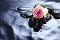 Картинка бутон, вода, камни, роза