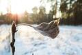Картинка солнце, лист. мороз, зима