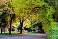 Картинка Парк Победы, Осень, Листопад, Желтые листья