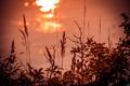 Картинка закат, река, трава, блики, силуэт, вода, волны, блик, макро