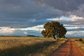 Картинка дерево, дорога, пейзаж