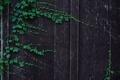 Картинка дерево, доски, забор, листья
