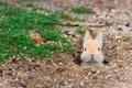 Картинка префектура Хиросима, Кролик-Айленд, одичавший домашний кролик, остров Окуносима, Япония