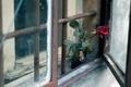 Картинка окно, цветок, роза