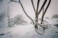 Картинка дерево, велосипед, снег, зима