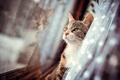 Картинка шерсть, Кот, окно, штора, отражения