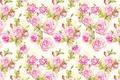 Картинка текстура, цветок, роза