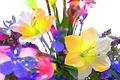 Картинка цветы, краски, лепестки, линии, природа