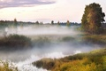 Картинка Туман, болото, древо